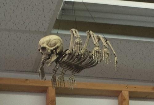 wtf halloween spooky funny - 7836964352