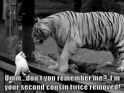 tigers Cats cousins vague - 7837392384