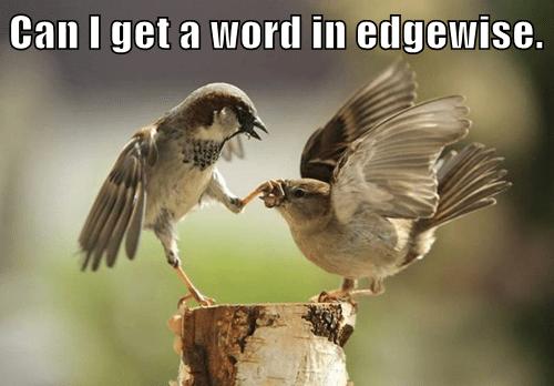 birds please peep - 7837780480