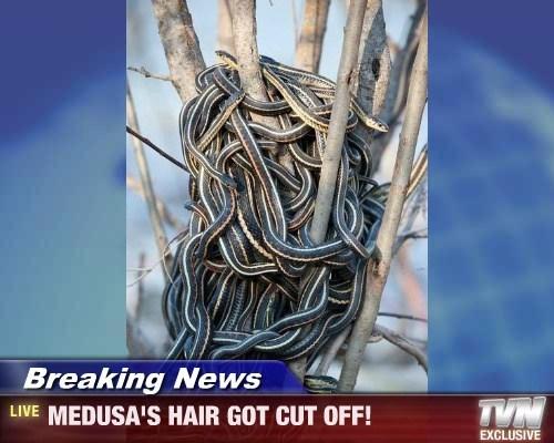hair creepy medusa Breaking News snakes - 7838422528
