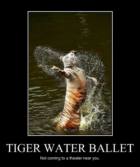 tigers,theater,dance