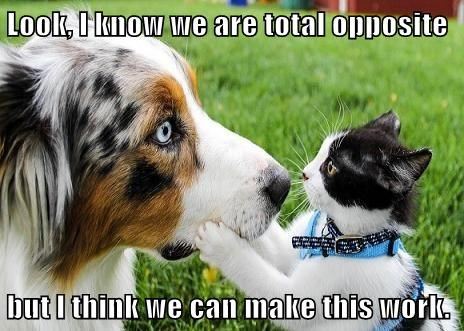 friendship dogs optimism Cats - 7838648320