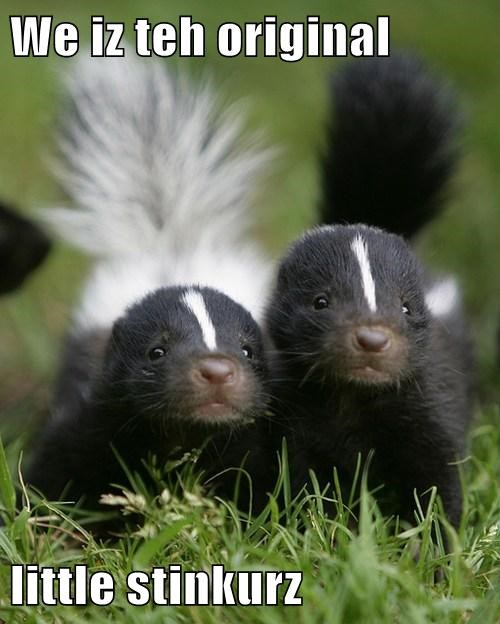 skunks,cute,stink,twins