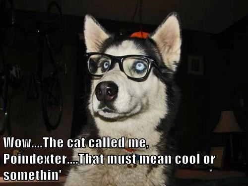 dogs clueless glasses nerd funny - 7839487744
