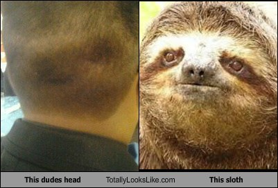 heads totally looks like sloths funny dude