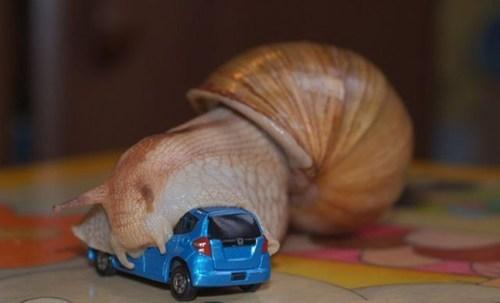 yikes snails wtf funny - 7839955200