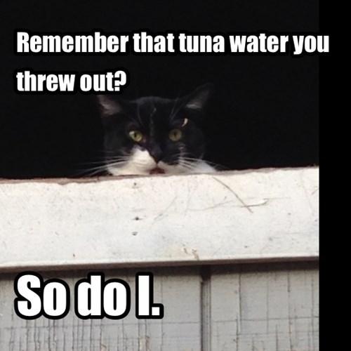tuna revenge Cats