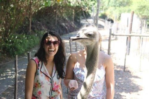photobomb,emus