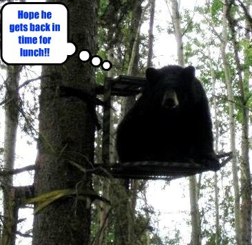 bears,hunter,funny,karma