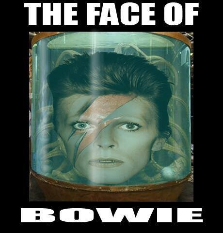 puns the face of boe david bowie