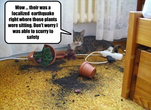 flower pot earthquake mischief Cats