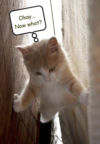 climbing mischief Cats funny - 7841075200