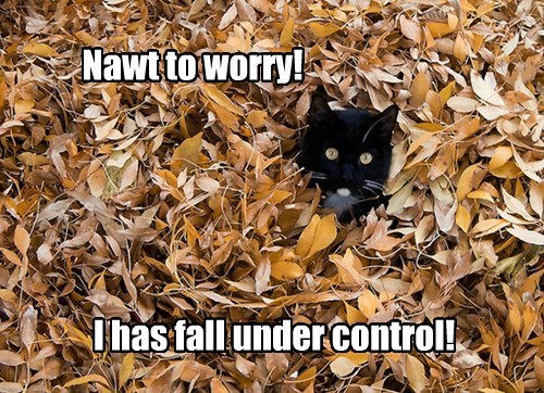 autumn puns leaves Cats fall - 7841302528