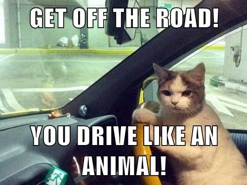 drive like an animal,road rage,animals driving,Cats