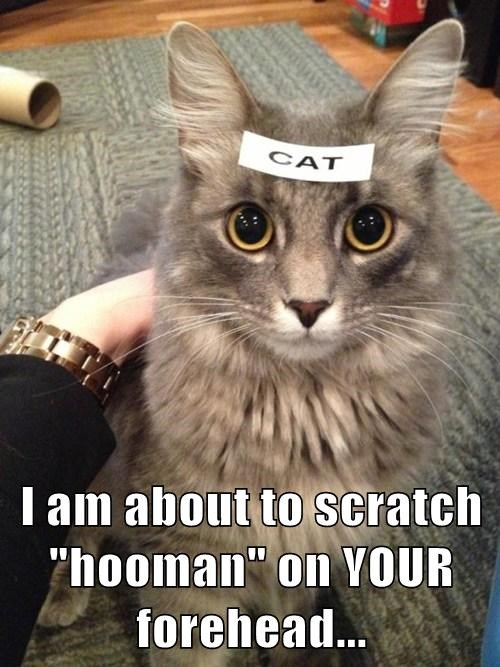"I am about to scratch ""hooman"" on YOUR forehead..."