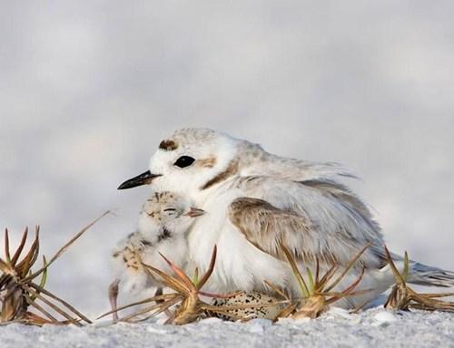 birds snow baby birds winter - 7841346048