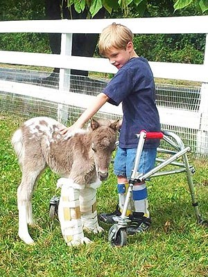 Miniature Horse,heart warming,recover,people pets,sweet