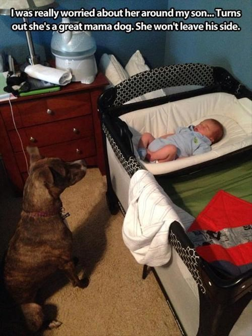 Babies dogs cute parenting - 7841466880