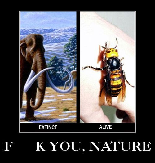nature,creepy,bees,wooly mammoth