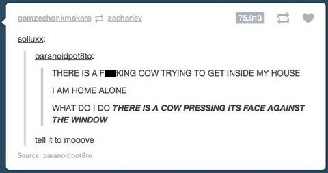 tumblr,cows