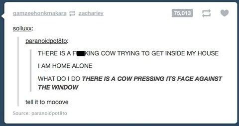 tumblr cows - 7841811456