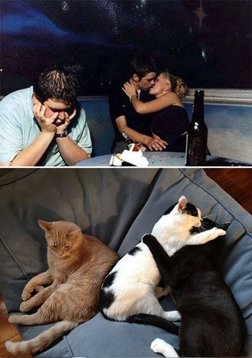 forever alone third wheel Cats funny - 7842000640