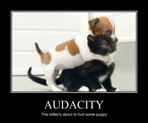 AUDACITY This kitten's about to hurt some puppy