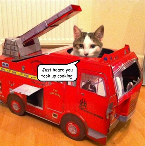 fire truck,cooking,burned,Cats