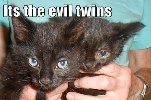 Its the evil twins