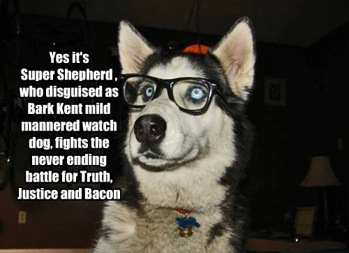 Yes it's Super Shepherd , who disguised as Bark Kent mild mannered watch dog, fights the never ending battle for Truth, Justice and Bacon