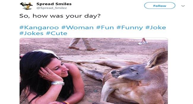 kangaroo funny tweets animal tweets - 7842565