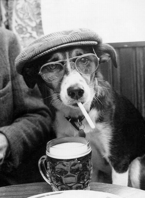 bar beer dogs cigarettes funny - 7843013632