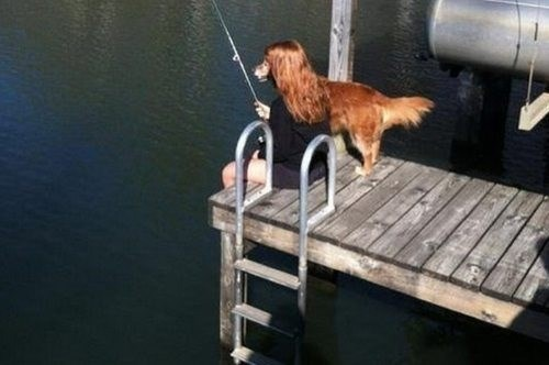 photobomb dogs fishing cute docks perfectly timed - 7843024640