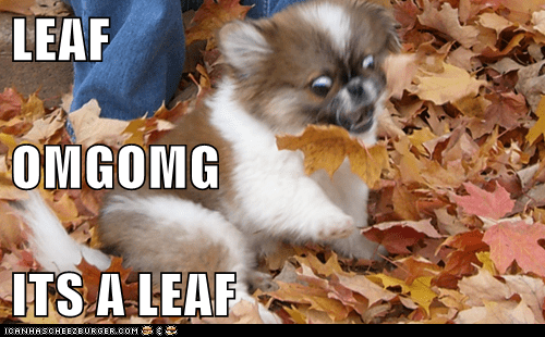 autumn freak out dogs leaf fall
