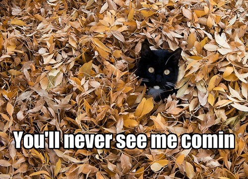 camo leaves Cats fall - 7843101440