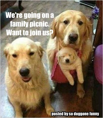 We're going on a family picnic. Want to join us? posted by so doggone funny
