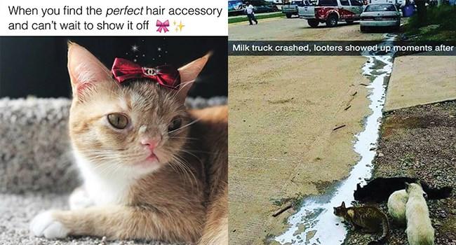 caturday cat memes