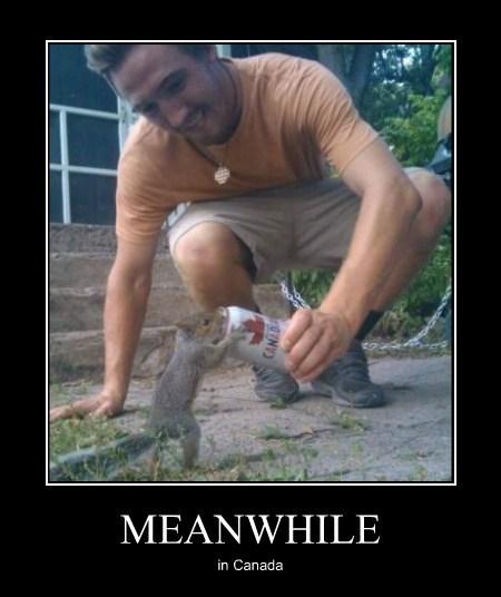 Canada beer squirrel funny - 7844304640