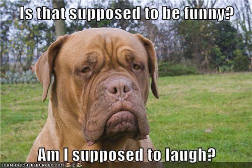 dogs wrinkles grumpy - 7844320256