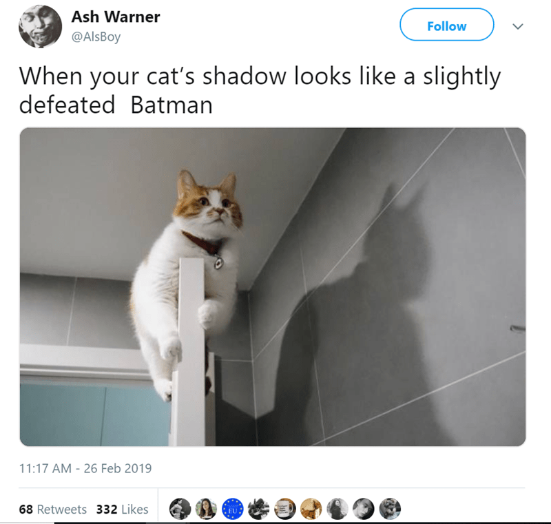 cat tweets batman funny tweets Cats - 7844357