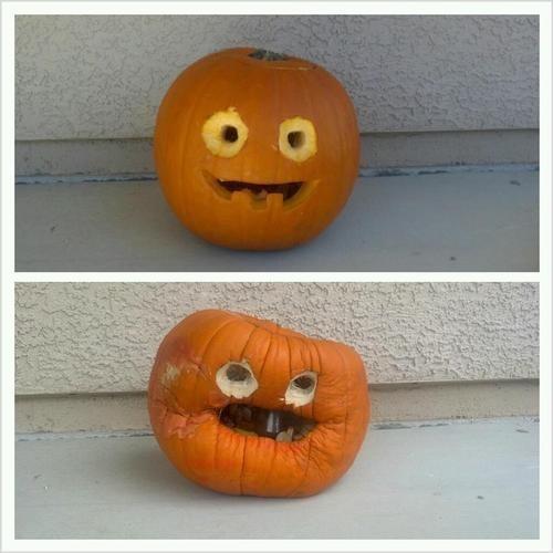 pumpkins halloween g rated - 7844477952