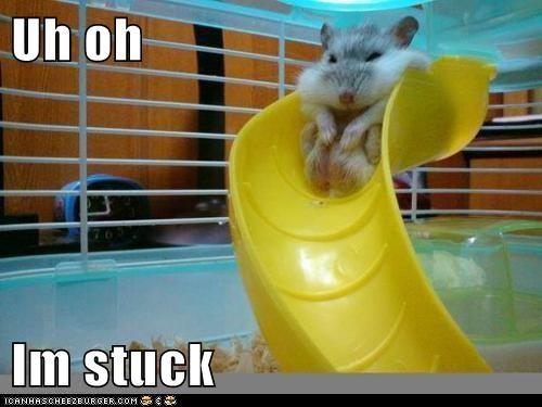 cheeks cute hamsters chubby - 7844496896
