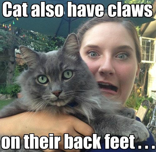 ouch,scratch,claws,Cats,funny
