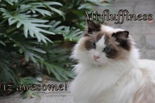 fluffiness Cats pretty - 7844655104