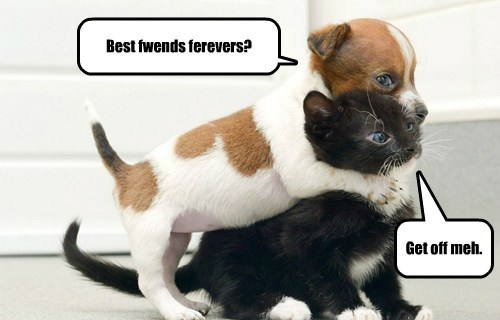 Best fwends ferevers? Get off meh.