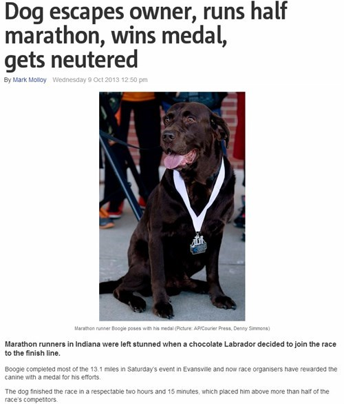 completely relevant news dogs news funny - 7844796928