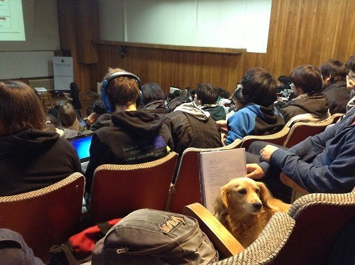 dogs school awesome study funny