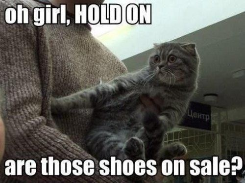 shoes Cats funny omg - 7844984320