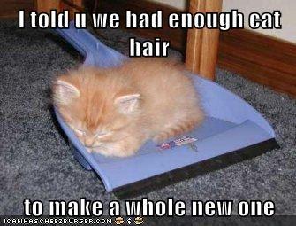 kitten fur ball dust pan Cats - 7845743360