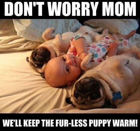 Babies snuggle puppies cute - 7846088704
